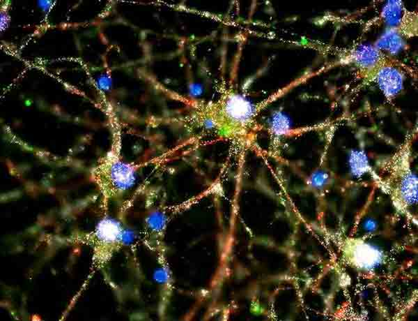 Fear in others can alter brain wiring