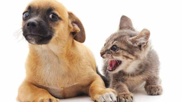 Cats 'may be as intelligent as dogs'
