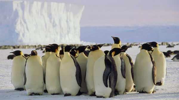Hungry penguins help keep car code safe