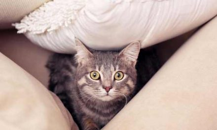 Pet cats exposed to high levels of harmful chemicals at home: Study