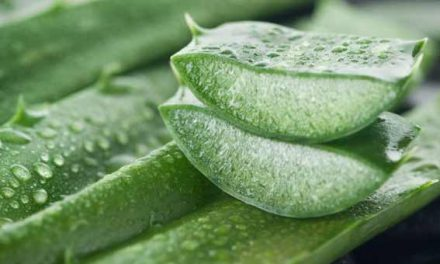 6 amazing benefits of aloe vera for hair, skin and weight-loss
