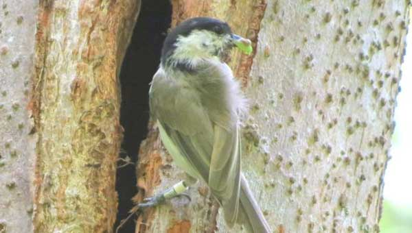 Nest-boxes no substitute for tree cavities: Study
