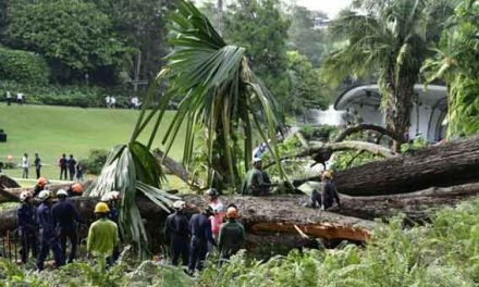 Fatal Singapore tree fall prompts questions