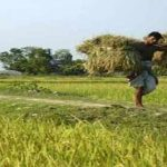 NPLs in agriculture sector falls in seven months