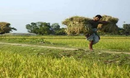 Bangladesh's agro-credit disbursements up by 22.44% in eight months