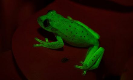 World's first fluorescent frog discovered in US