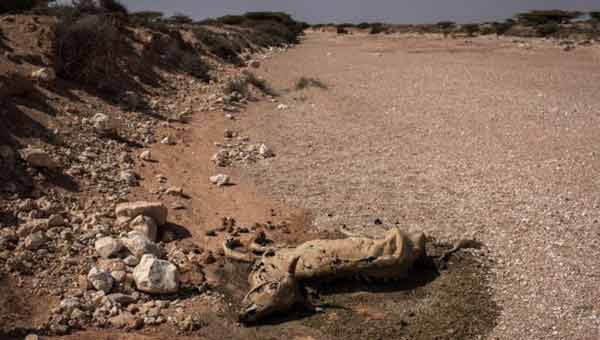 Somalia: 110 dead from hunger in last 48 hours of drought