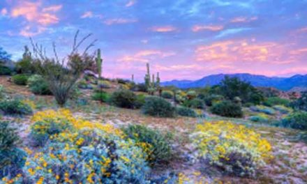 Rare 'super bloom' brightens up deserts in US