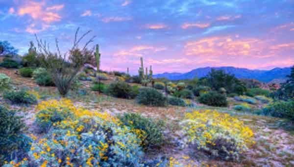 Rare 'super bloom' brightens up deserts in US