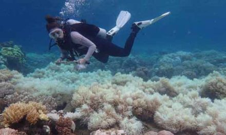 Damage to Great Barrier Reef 'unprecedented'