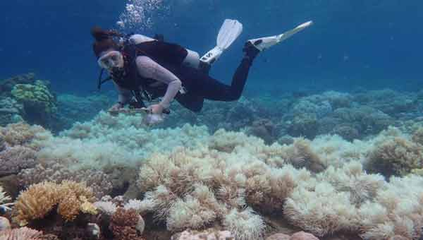 Damage to Great Barrier Reef 'unprecedented'