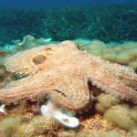 Octopuses and squids can rewrite their RNA. Is that why they're so smart?