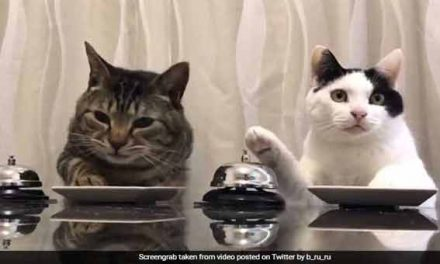 These cats ring a bell to ask for treats