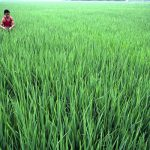 Agriculture loan disbursements rise 35.46% in July-Aug