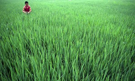 ADB for mitigating agriculture risks in Bangladesh