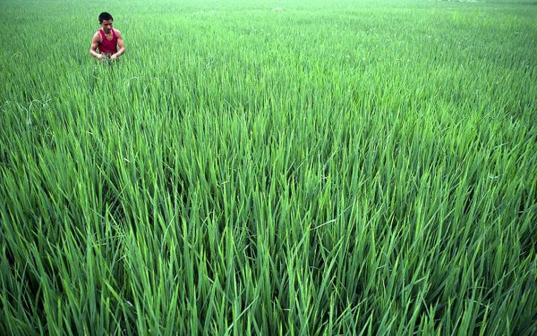 Farm credit disbursement to cross target of FY'19