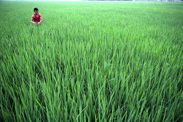 Bangladesh cuts interest rate ceiling on agro credit
