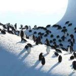 UK's Antarctic islands need protection: Environmentalists