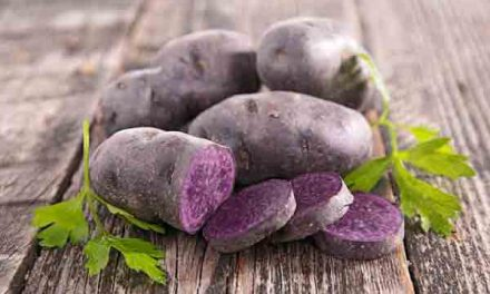 'Purple potatoes may slash risk of colon cancer'