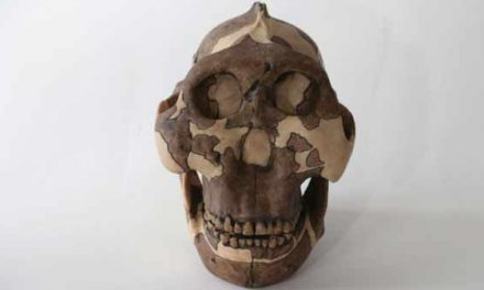 Early human ancestor is to blame for genital herpes