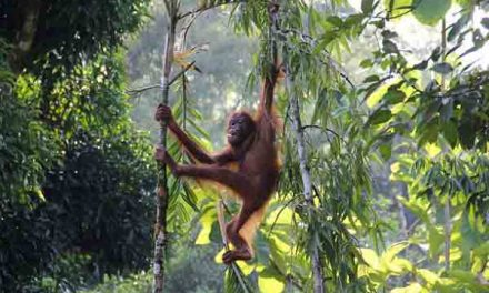 Tropical forests reduce carbon emissions from tropical deforestation