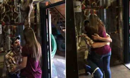 Giraffe helps man propose to his girlfriend