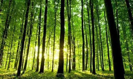 Living next to a forest is good for the brain