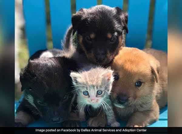 Orphaned kitten adopted by a dog
