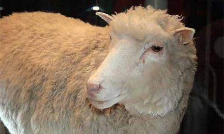 Dolly, the first animal cloned sheep, didn't die early because she is a clone