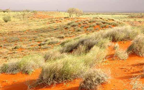 Magical 'sparkling' grass species discovered in Outback Australia