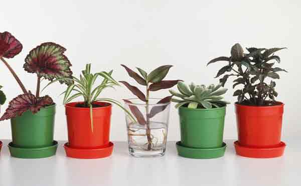 Just add water: how to take cuttings from houseplants