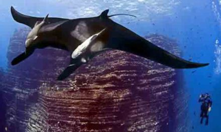 Mexico creates huge marine national park