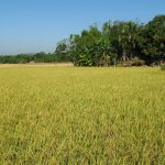 Bangladesh eases farm loan rescheduled policy