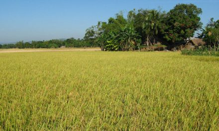 Bangladesh's crop loans come under CIB reporting