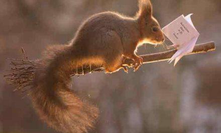 Squirrels enjoy Harry Potter's favourite sport