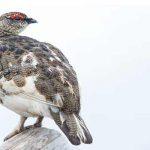 Britain's birdlife takes flight