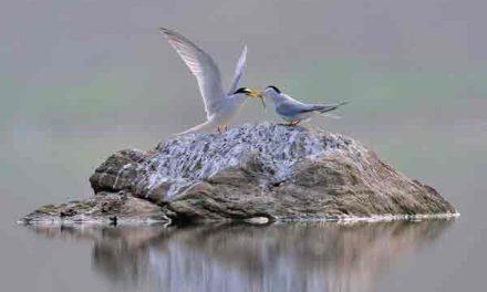 Cornish coastline plan offers new haven for rare seabirds